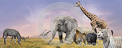 stock image of savanna wild animals collage