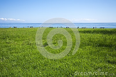 Picnic grounds in grassy field at the ocean