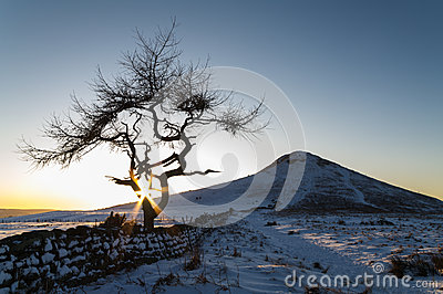 Lone Tree in a winter landscape - Roseberry Topping - North Yorkshire - UK