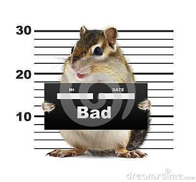 Mugshot background with rodent