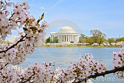 Tidal Basin Jefferson Memorial Washington DC