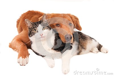 Cat and dog in an intimate pose, isolated on white