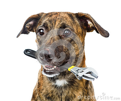 Dog with adjustable wrench. isolated on white background