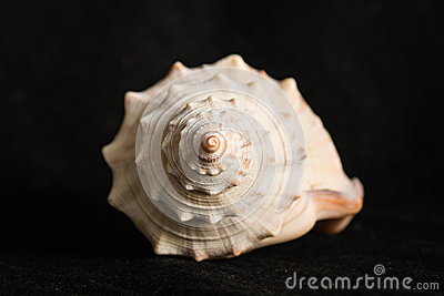 Detail of spiral seashell