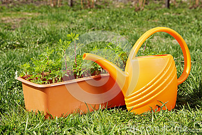 Box with seedling and watering can stand on the grass