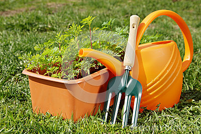 Gardening tools with watering can and a box of seedling