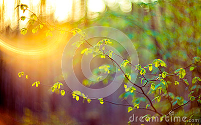 Lens flare nature green