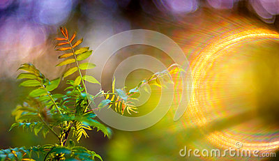 Spring leaves and lens flare