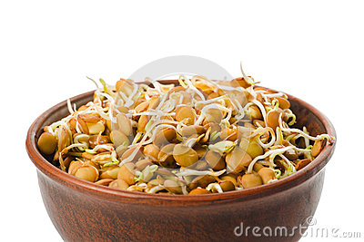 Natural lentil sprouts for raw foodists in a clay bowl