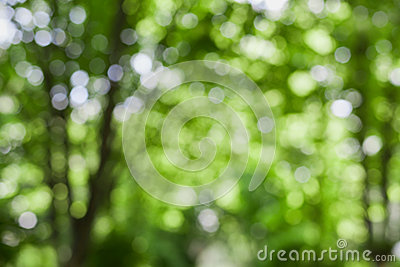 Beautiful blurred summer trees in park, natural green bokeh background