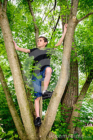 Boy Climbing Tree looking to Left