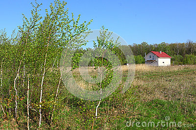 Lonely house in the spring field on the birch forest background