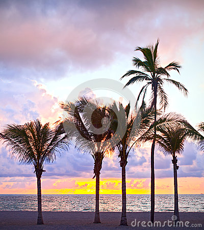 Miami Beach, Florida colorful summer sunrise or sunset with palm trees