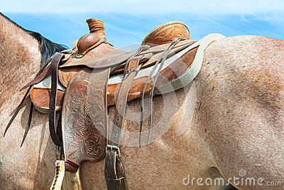 Rodeo horse details