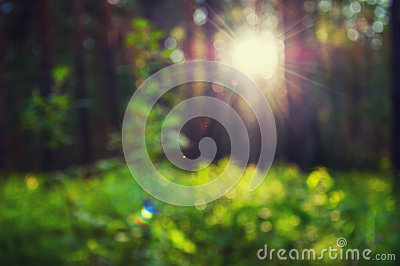 Blurred forest background with green grass and sunbeams through