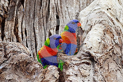 Colorful birds in colorless tree