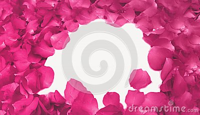 Abstract Pink Rose Petals as Frame used as Template with Soft Focus Color Filtered Background