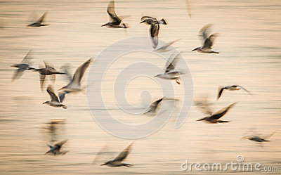 Abstract birds flight speed movement