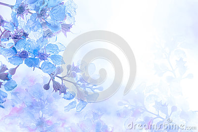 Abstract soft sweet blue purple flower background from Plumeria frangipani