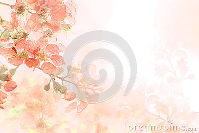 Abstract soft sweet orange flower background from Plumeria frangipani flowers