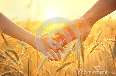 Couple taking hands and walking on golden wheat field