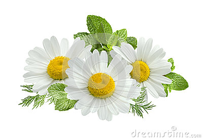 Chamomile flower mint leaves composition isolated on white