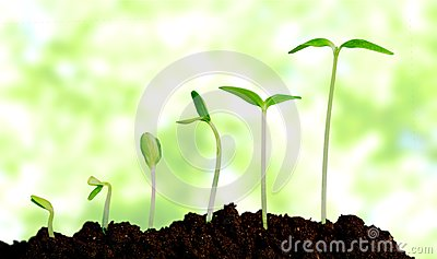 stock image of grow, growing, plant
