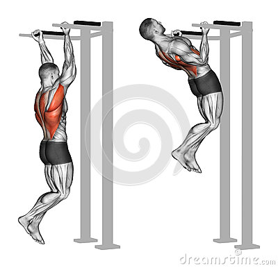 Exercising. Reverse grip pull-ups on the back muscles