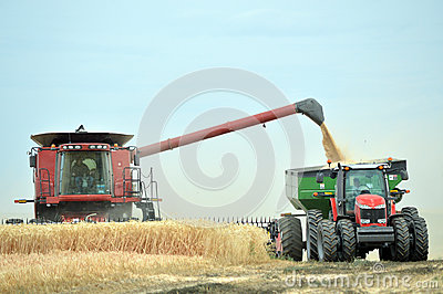 Combine and tractor harvesting wheat