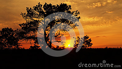 Landscape with warm sunset and red clouds