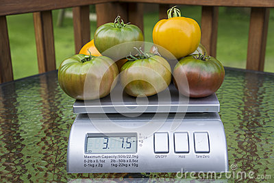 Heirloom Tomatoes On Produce Scale