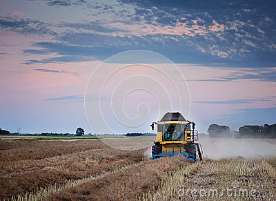 Harvesting oilseed rape.