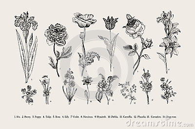 Botany. Set. Vintage flowers.
