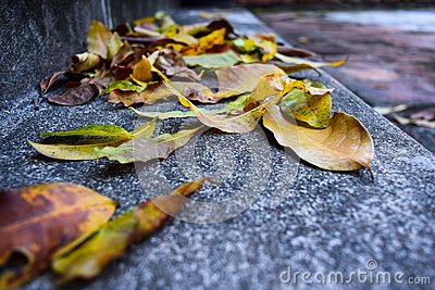 Yellow falling leaves on granite steps on autumn time