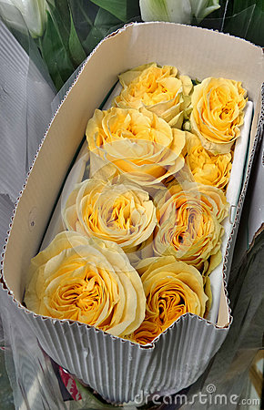 Close up of a bunch of yellow rose in crepe box under sun light