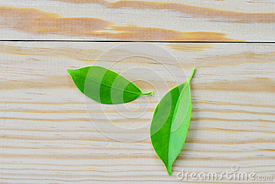 Leaves wood background