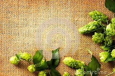 Ingredients for brewing beer. Fresh hop on burlap close up