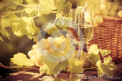 Wine glass and grapes of vine