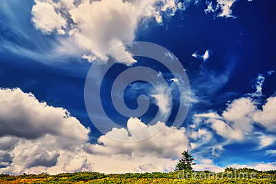 Landscape tree and field of green fresh grass under blue sky