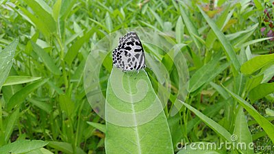 A butterfly feeling alone in the nature