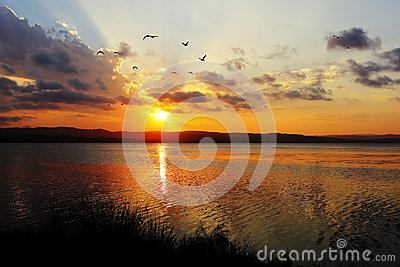 Lake idyll with gulls at sunset by cloudy sky
