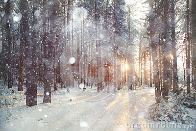 Background winter forest