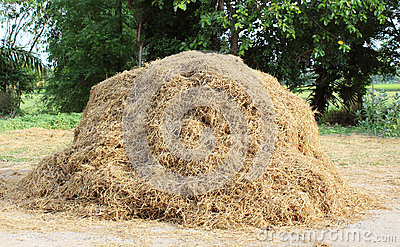 A pile of hay