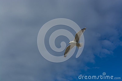 Sea bird flying over sennen cove breakwater