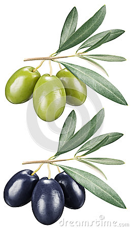 Green and black olives with leaves on a white background.