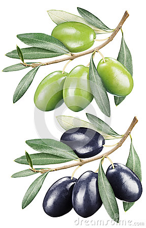 Green and black olives with leaves.