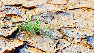new life new hope , green grass grown on dry pollution land