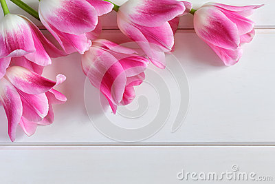 Pink Tulips on a white wooden planks