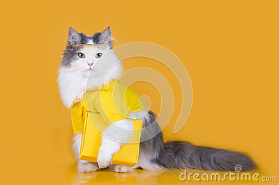 Cat works as a courier on a yellow background