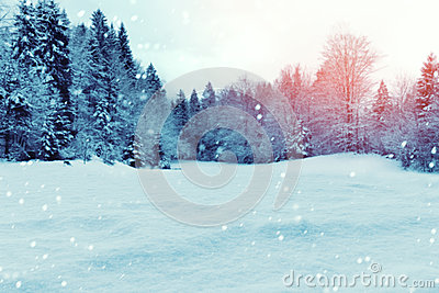 Christmas winter background with snow and trees